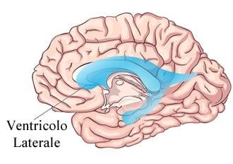 https://www.my-personaltrainer.it/imgs/2018/06/11/ventricoli-cerebrali-ventricolo-laterale-orig.jpeg