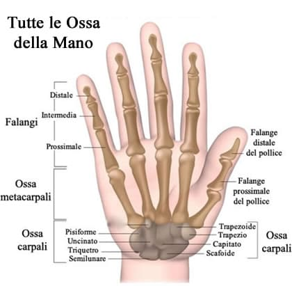 https://www.my-personaltrainer.it/imgs/2018/07/09/ossa-del-polso-ossa-della-mano-orig.jpeg