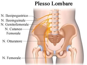 https://www.my-personaltrainer.it/imgs/2018/07/20/nervi-spinali-plesso-lombare-orig.jpeg