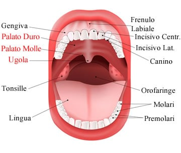 https://www.my-personaltrainer.it/imgs/2018/07/30/palato-duro-e-palato-molle-anatomia-orig.jpeg