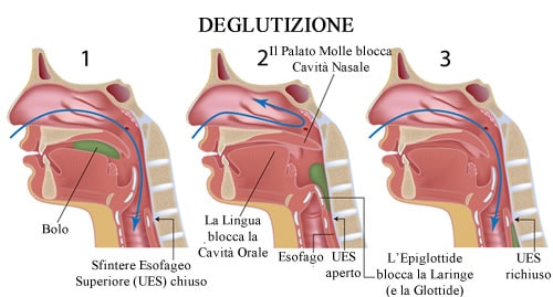 https://www.my-personaltrainer.it/imgs/2018/08/01/glottide-deglutizione-orig.jpeg