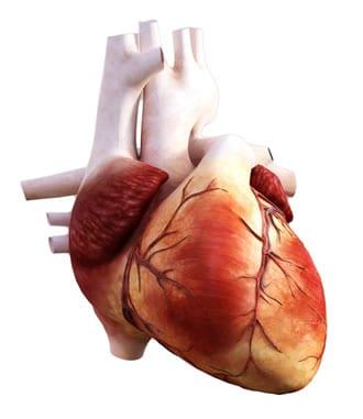https://www.my-personaltrainer.it/imgs/2018/09/15/coronarie-orig.jpeg