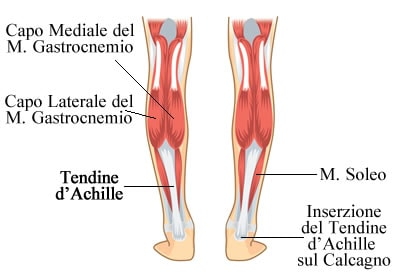 https://www.my-personaltrainer.it/imgs/2018/09/15/tendine-d-achille-gastrocnemio-soleo-e-calcagno-orig.jpeg