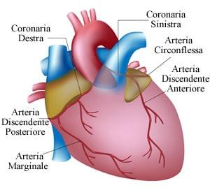 https://www.my-personaltrainer.it/imgs/2018/09/18/coronarie-branche-orig.jpeg