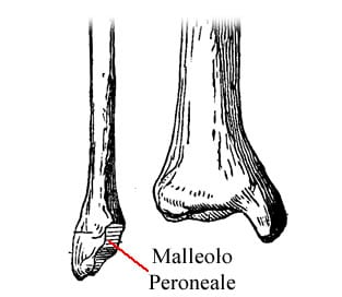 https://www.my-personaltrainer.it/imgs/2018/09/22/tibia-e-perone-epifisi-distale-del-perone-orig.jpeg