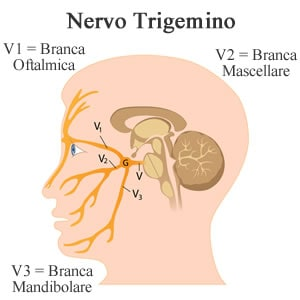https://www.my-personaltrainer.it/imgs/2018/11/12/nervi-cranici-nervo-trigemino-orig.jpeg