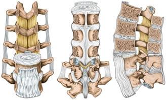 https://www.my-personaltrainer.it/imgs/2018/11/26/vertebre-lombari-legamenti-della-schiena-orig.jpeg
