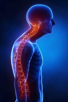https://www.my-personaltrainer.it/imgs/2018/12/01/vertebre-toraciche-patologie-orig.jpeg
