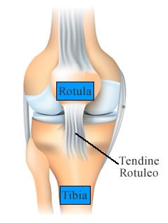 https://www.my-personaltrainer.it/imgs/2018/12/10/morbo-di-osgood-schlatter-tendine-rotuleo-orig.jpeg