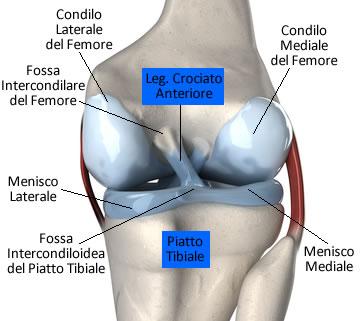 https://www.my-personaltrainer.it/imgs/2019/01/28/legamento-crociato-anteriore-anatomia-orig.jpeg