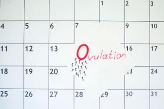 Calendario Dell Ovulazione.Periodo Fertile