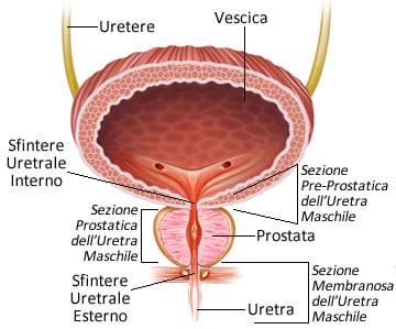 la prostata è solo uomo video