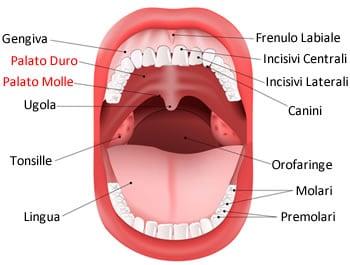 https://www.my-personaltrainer.it/imgs/2019/02/19/palato-duro-anatomia-del-palato-orig.jpeg