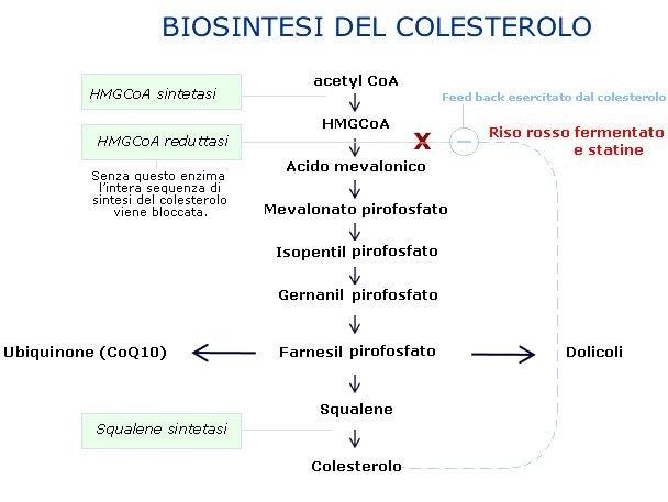 https://www.my-personaltrainer.it/imgs/2019/02/23/biosintesi-del-colesterolo-orig.jpeg