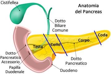 https://www.my-personaltrainer.it/imgs/2019/02/25/dove-si-trova-il-pancreas-ripasso-anatomia-orig.jpeg