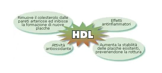 Ecco come Aumentare il Colesterolo HDL - My-personaltrainer.it