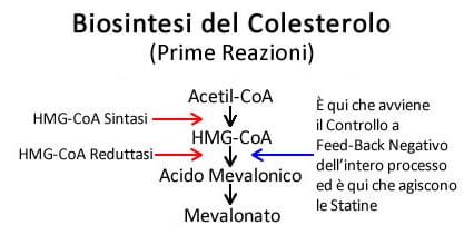 https://www.my-personaltrainer.it/imgs/2019/02/28/sintesi-colesterolo-prime-reazioni-orig.jpeg