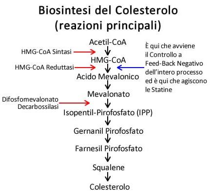 https://www.my-personaltrainer.it/imgs/2019/02/28/sintesi-del-colesterolo-reazioni-principali-orig.jpeg