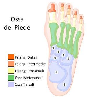 https://www.my-personaltrainer.it/imgs/2019/03/27/come-si-chiamano-le-dita-dei-piedi-ripasso-dita-del-piede-orig.jpeg