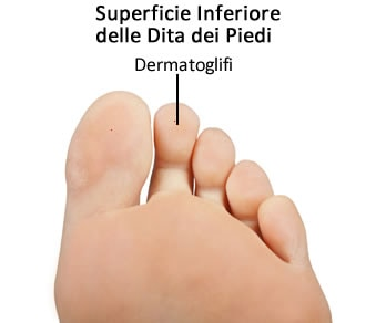 https://www.my-personaltrainer.it/imgs/2019/03/27/dita-del-piede-superficie-inferiore-orig.jpeg