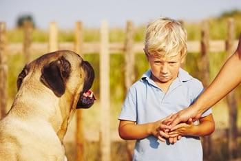 https://www.my-personaltrainer.it/imgs/2019/05/15/paura-dei-cani-orig.jpeg