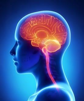 https://www.my-personaltrainer.it/imgs/2019/05/20/organi-del-corpo-umano-organi-vitali-2-orig.jpeg