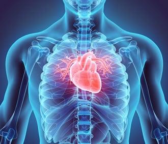 https://www.my-personaltrainer.it/imgs/2019/05/20/organi-del-corpo-umano-organi-vitali-orig.jpeg
