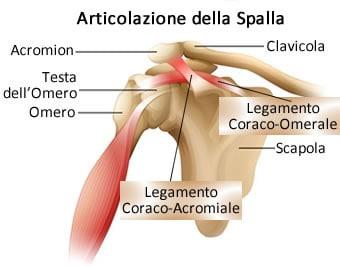 https://www.my-personaltrainer.it/imgs/2019/06/18/articolazione-della-spalla-anatomia-3-orig.jpeg