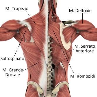 https://www.my-personaltrainer.it/imgs/2019/06/20/muscoli-della-spalla-anatomia-3-orig.jpeg