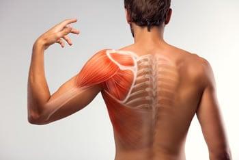 https://www.my-personaltrainer.it/imgs/2019/06/20/muscoli-della-spalla-orig.jpeg