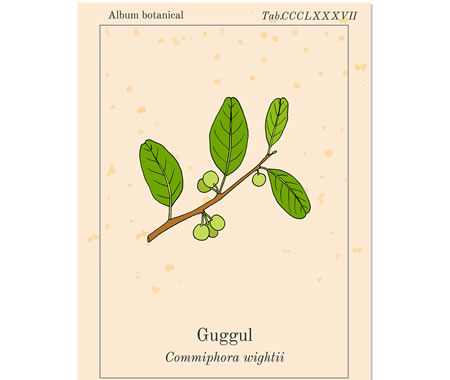 https://www.my-personaltrainer.it/imgs/2019/09/13/commiphora-mukul-guggul-2-orig.jpeg