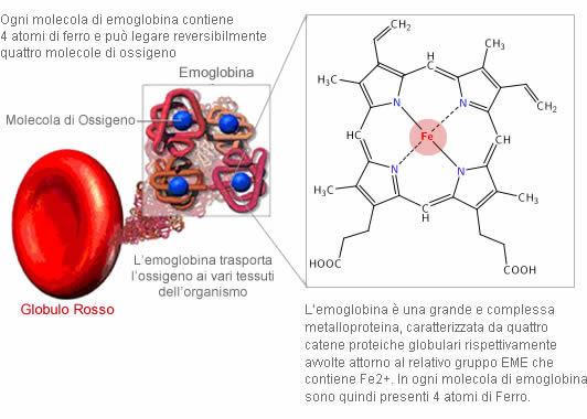 Emoglobina e Ferro
