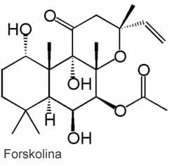 Forskolina