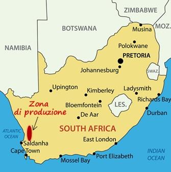 Rooibos - Cederberg Sud Africa