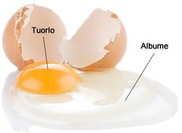 Albume, Tuorlo d'uovo