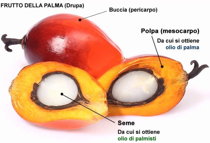 Palma Frutto