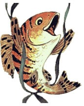 Pesce di allevamento