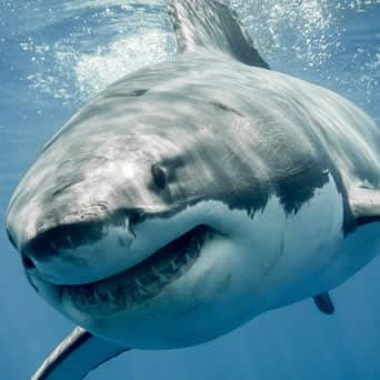 Pesce squalo e mercurio