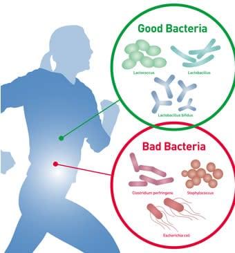 Probiotici e salute