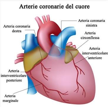 Coronarie - Arterie Coronarie