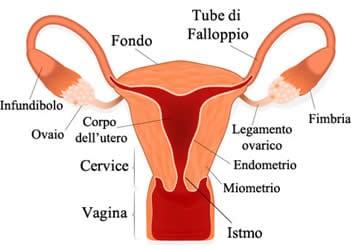 Hamer: Carcinomi dell'utero