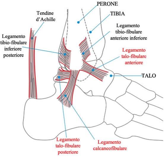 Caviglia Legamenti