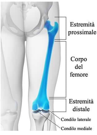 Anatomia del Femore