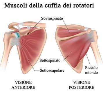 Muscoli Cuffia dei Rotarori