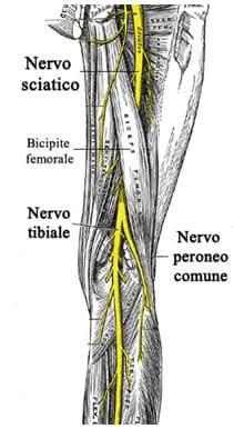 Nervo Sciatico