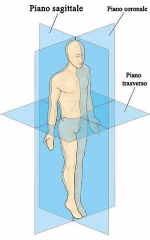Piani corpo umano