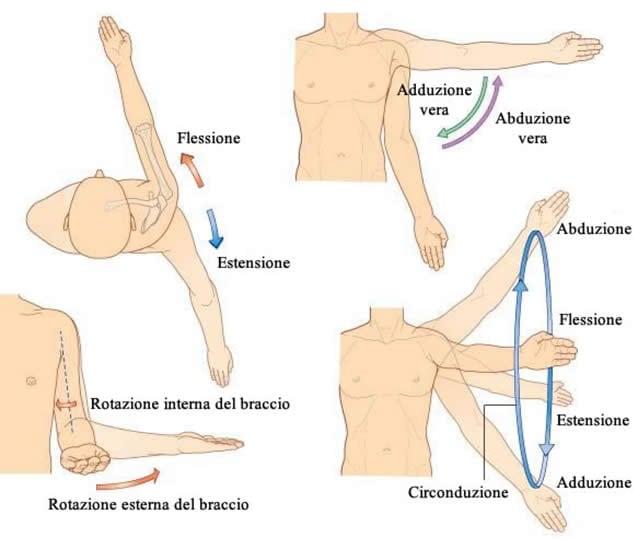Movimenti della spalla