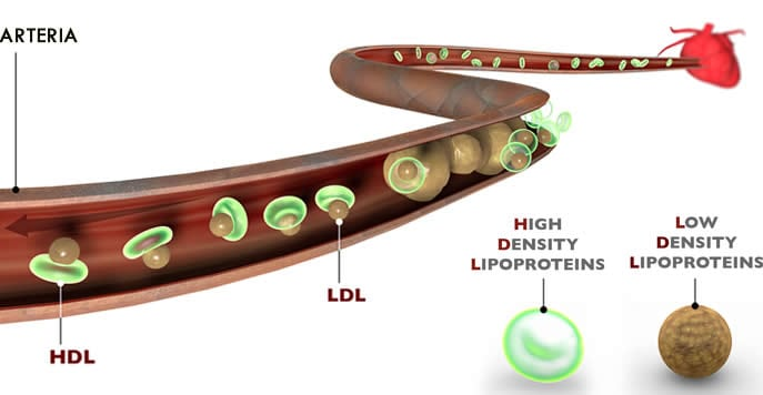 sintesi ormoni steroidei biochimica