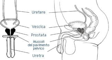 Biopsia della Prostata