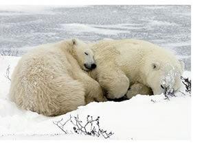 sonno-termoregolazione